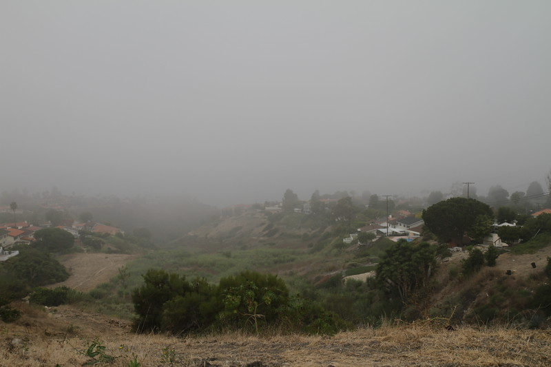 Photo Point 1, A Foggy Morning.