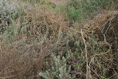 They have cut down the weeds along the upper path which is good, but they dumped the debris on the native plants on the other side!