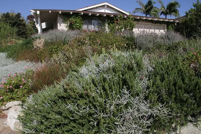 Steve Kowalski's Garden