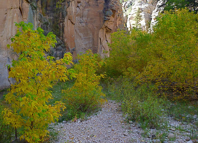 Sundance Canyon - fall colors along West Clear Creek