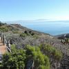 Coastal Sage Scrub hillside