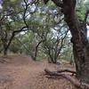 Trail through oak woodland