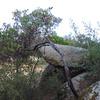 Granitic Boulders