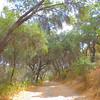 Oak lined trail