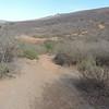 Horned Lizard Trail