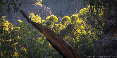 Cliffs down Yarramun Creek
