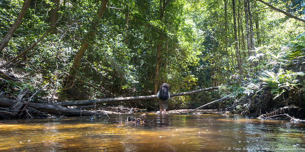 Easy going - much of the creek had log jams, so was slow