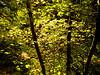 Yellow trees Angel's Landing trail Zion P1100799