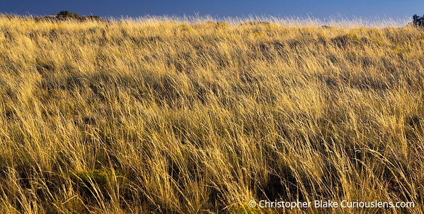 Murphy Trail Tall Grass