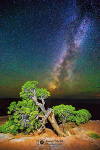 """Milky Way Bonsai,"" Canyonlands Milky Way, Canyonlands National Park, Utah"