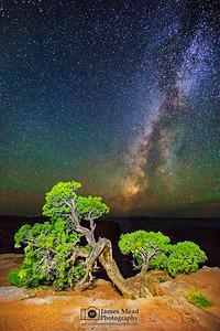 """Bonsai Ridge,"" Milky Way over Utah Juniper, Canyonlands National Park"