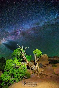 """Juniper Starlight,"" Canyonlands Milky Way, Canyonlands National Park, Utah"