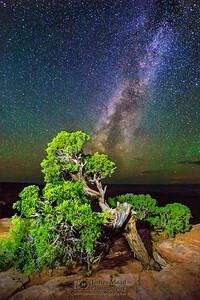 """Wrath of Time,"" Juniper Bonsai Milky Way, Canyonlands National Park"