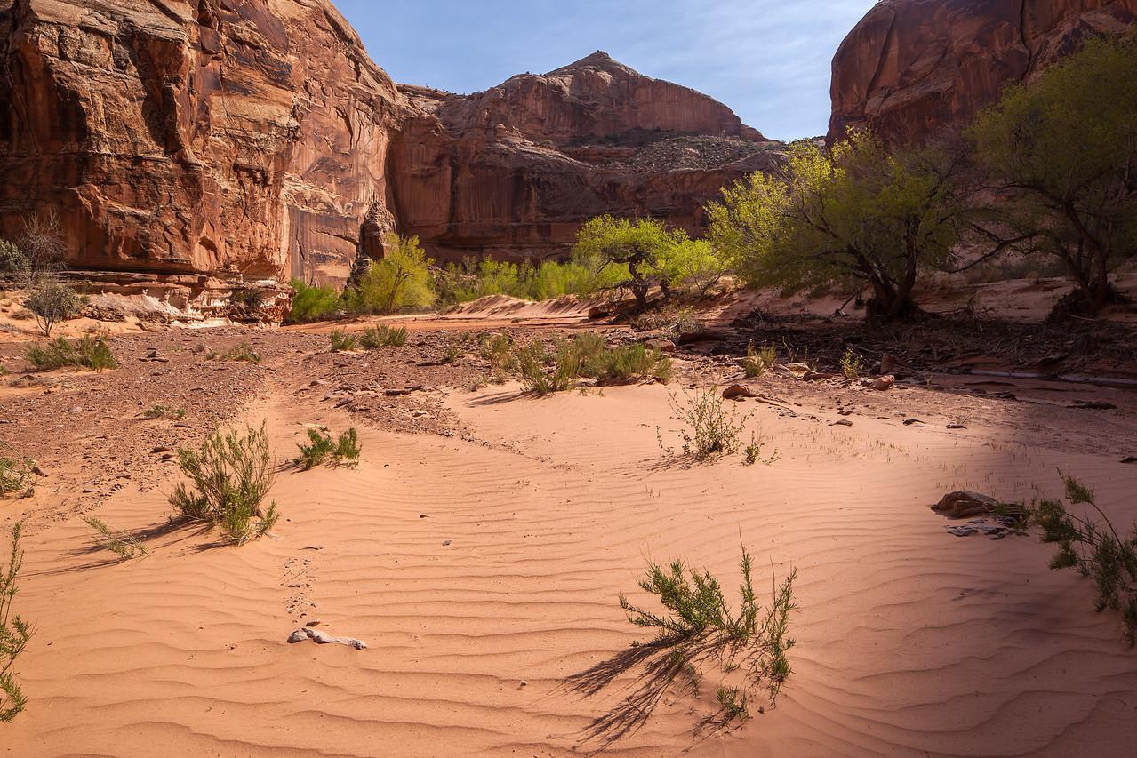 """""""Horseshoe Canyon"""""""