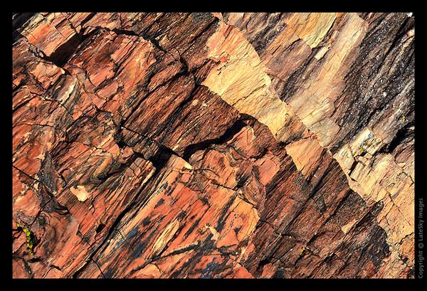 SW11_8047 Petrified Bark