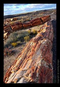 SW11_8036 Angled Logs