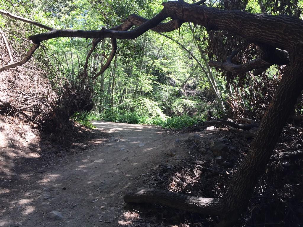 Trail View # 9