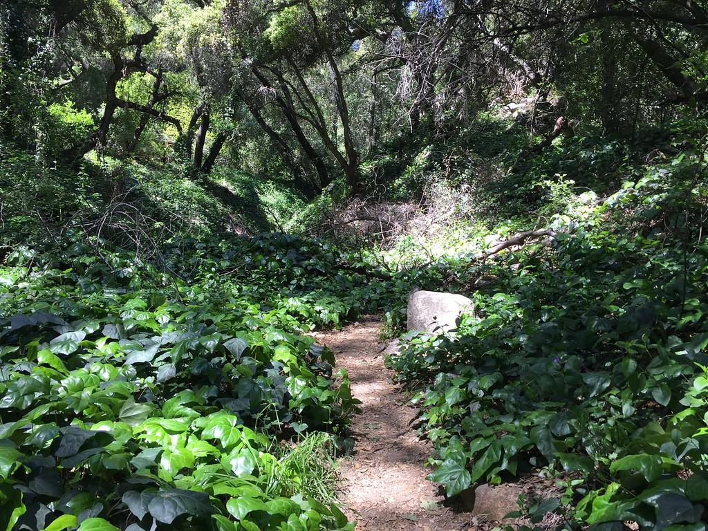 Trail View # 27