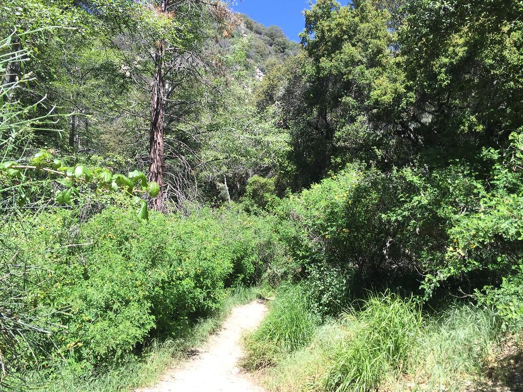 Trail View # 12