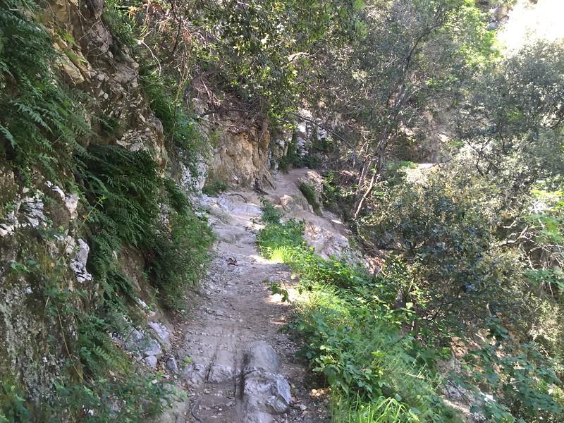 Trail View # 4