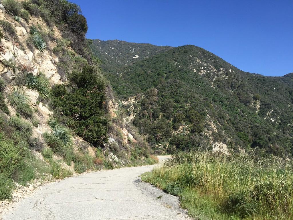 Trail Entrance View # 4