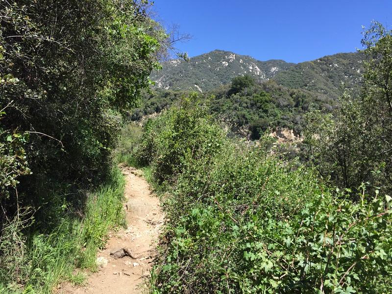 Trail View # 7