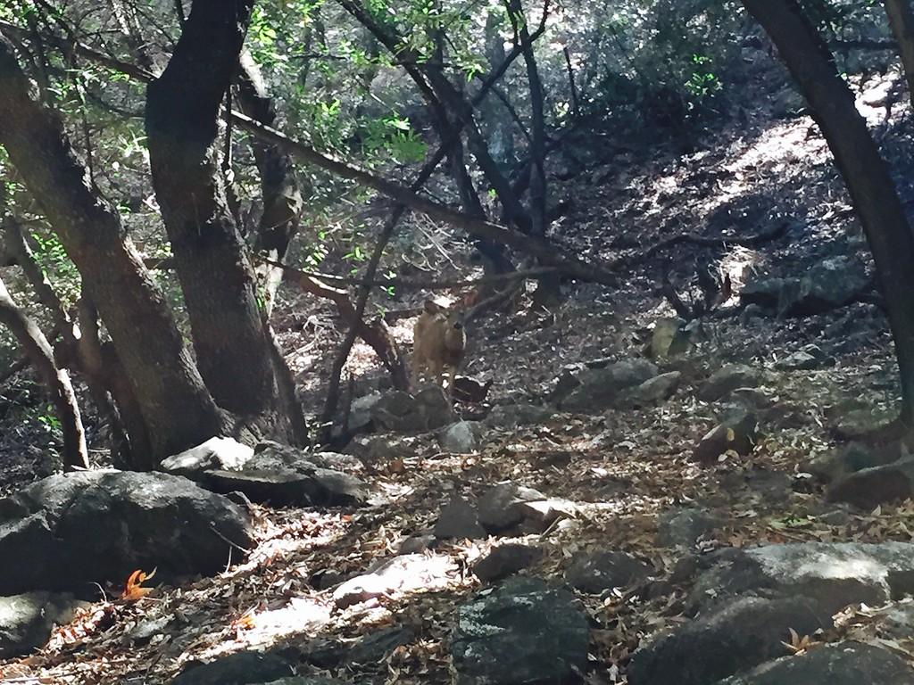 Trail View # 35