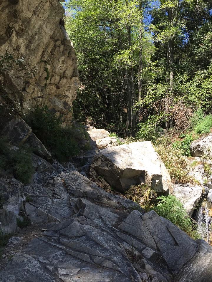 Trail View # 2