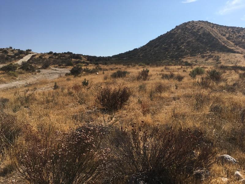 Mesa View # 31