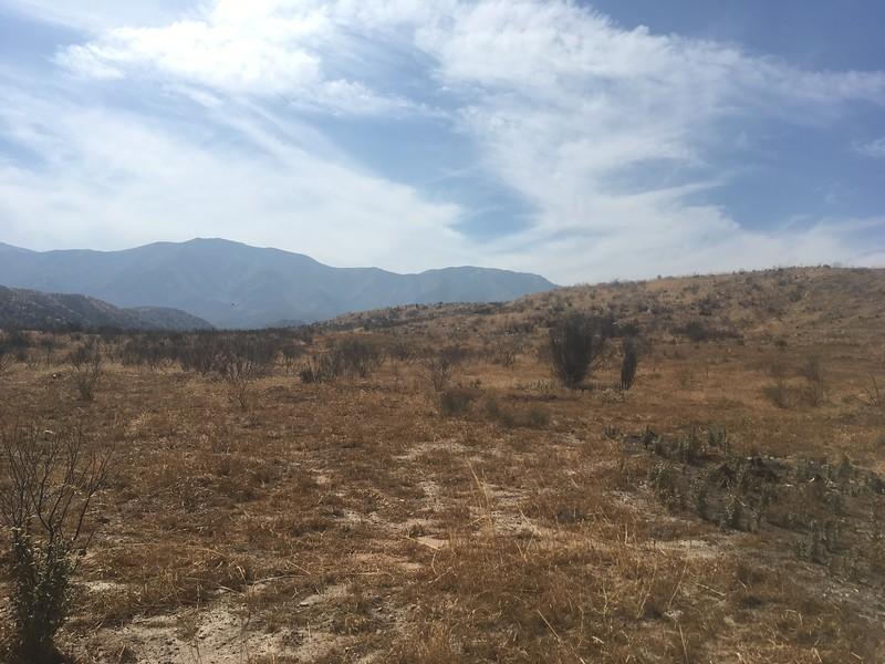 Mesa View # 10
