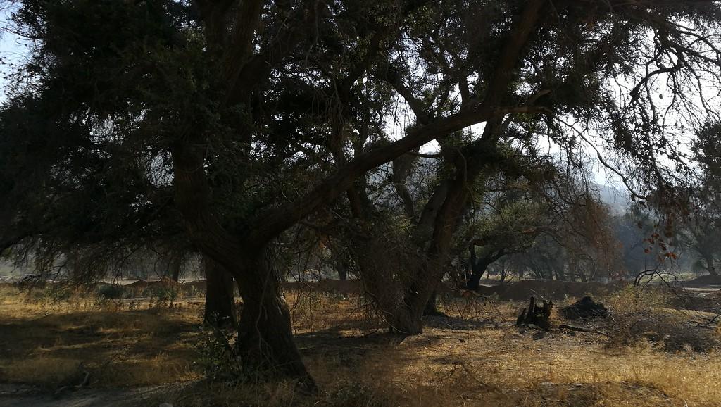 Landscape View # 1
