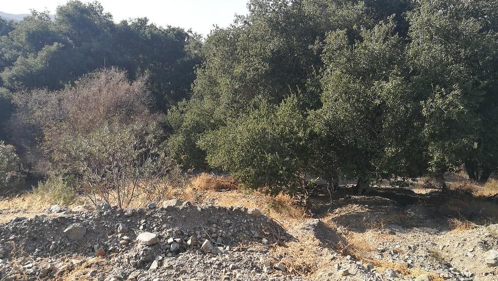 Landscape View # 41