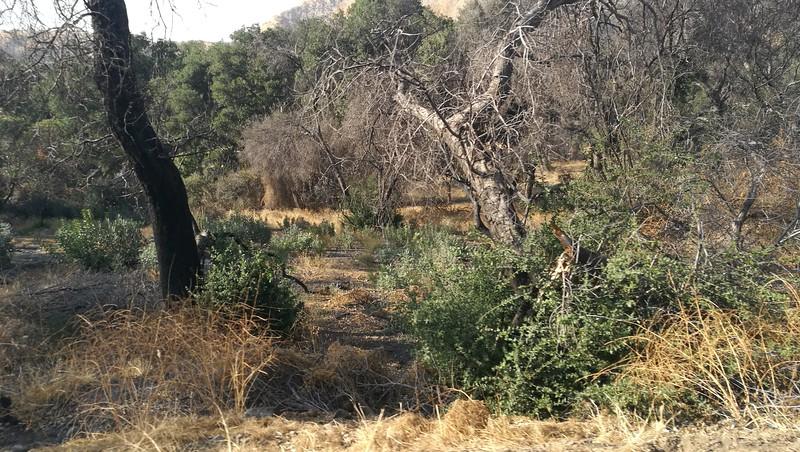 Landscape View # 29