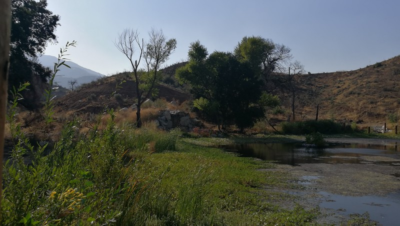 Pond View # 1