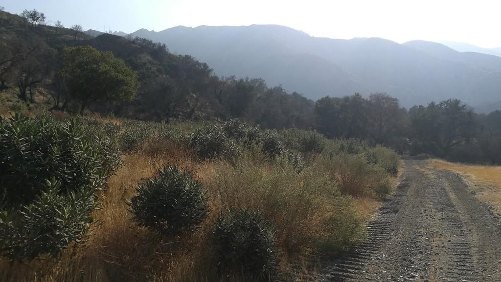 Landscape View # 23