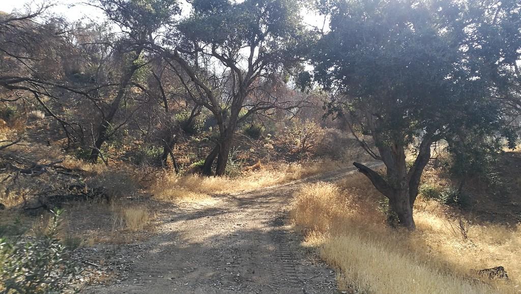 Landscape View # 26