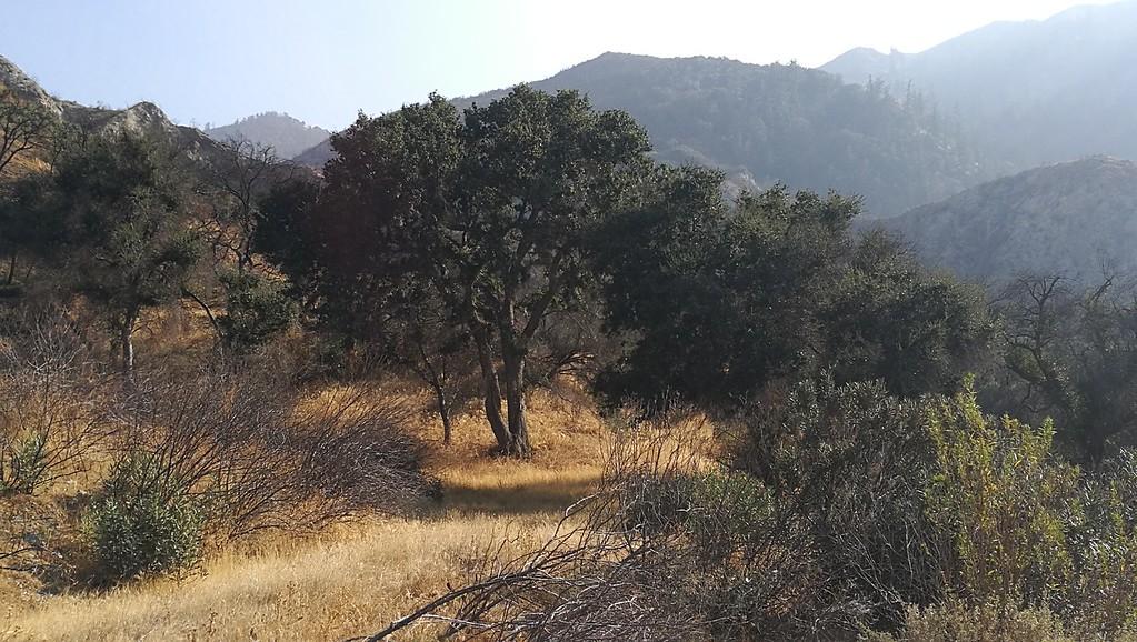 Landscape View # 36