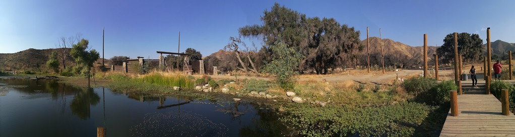 Pond View # 5