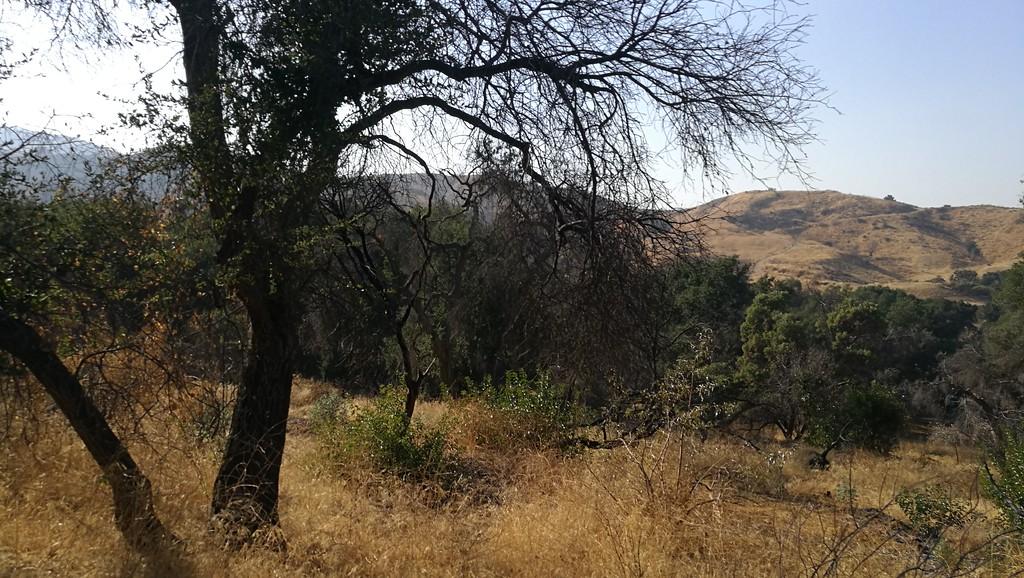 Landscape View # 31