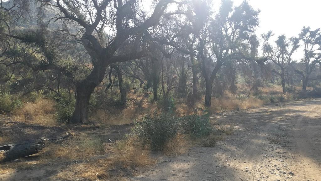 Landscape View # 13