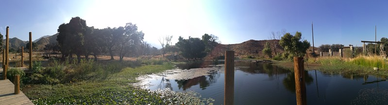 Pond View # 3