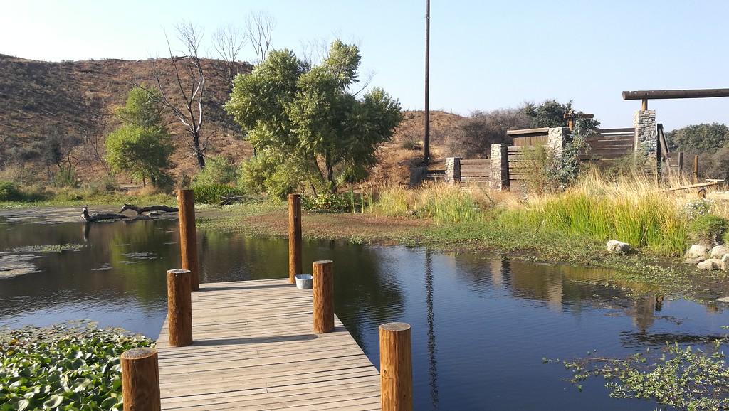 Pond View # 2