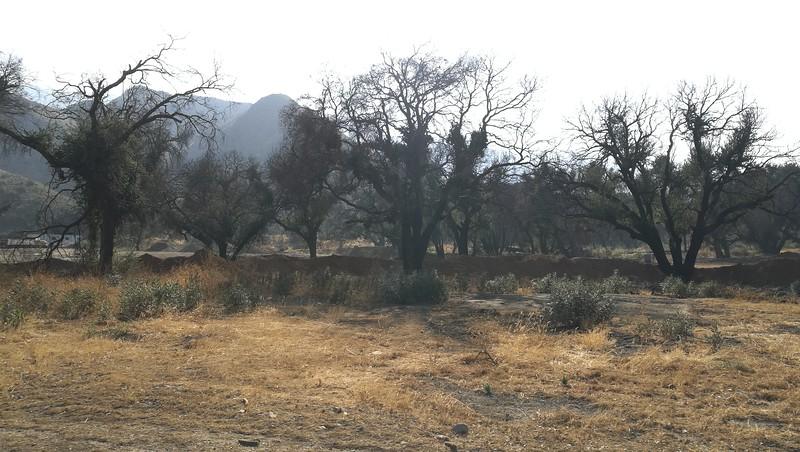 Landscape View # 2