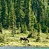 08/11/17: A horse getting a refreshing drink at Annette Lake.