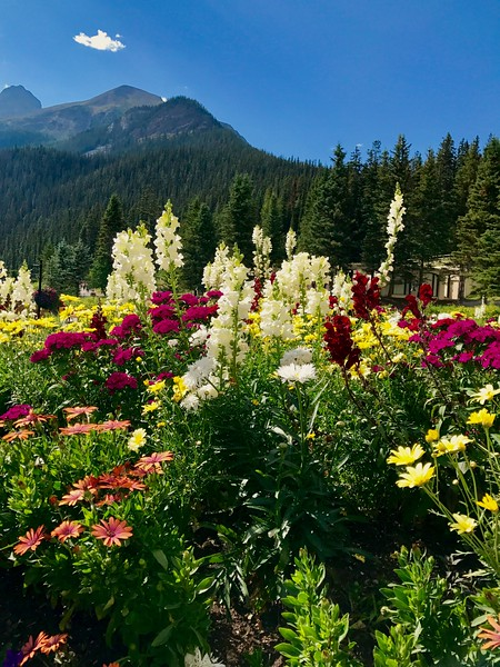 08/10/17: Wildflowers at the Fairmont Chateau.