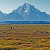 09/25/11: Panoramic view of the Teton Range from Jackson Lake Lodge.