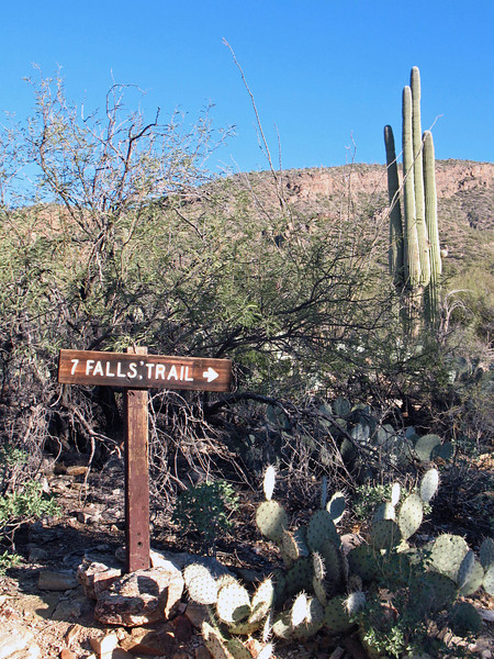 This is one of the most beautiful hikes southern Arizona offers and to get to Seven Falls, you must hike through Bear Canyon.