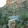 The landscape within Bear Canyon is similar to Sabino Canyon; very wild with lush and towering cactus.