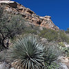 The vegetation in this area includes saguaros, ocotillo, prickly pear, and mesquite trees.