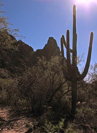 Ventana Canyon Trail '13